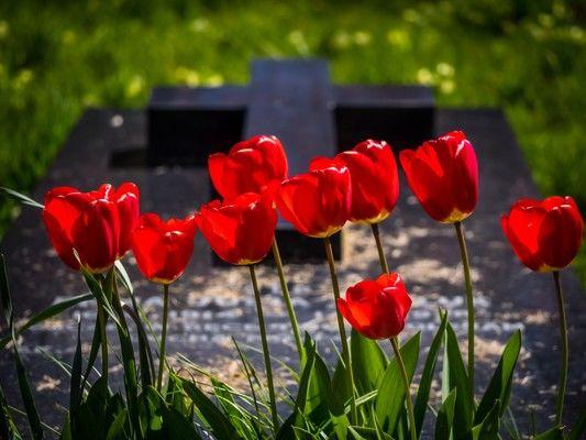 自由葬はどんな流れで進行する?メリットや注意点なども紹介します