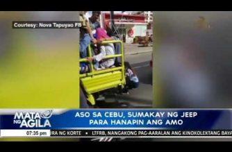 Isang aso sa Cebu City sumakay ng jeep para hanapin ang kaniyang amo