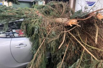 A fallen tree caused by a windstorm that blew through Vancouver, Canada damages a car. Photo by Benedict Aquino, EBC Canada Bureau.