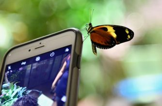 (FILES) In this file photo taken on October 3, 2018 a butterfly sits on a mobile phone during a preview visit of the butterfly conservatory at the American Natural History Museum in New York. - Mobile app downloads are surging around the world with growth in smartphone use, with nearly half coming from China, a market tracker said January 16, 2019. Mobile research firm App Annie forecast that the amount of money spent on apps for smartphones or tablet computers this year will grow five times as fast as the global economy, surpassing $120 billion. (Photo by Angela Weiss / AFP)