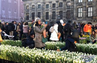 Visitors got the chance to take home free tulips during the celebration of National Tulip Day in Netherlands on January 19, 2019.  (Photo by Sam and Shina Laureta, Eaglenews Amsterdam, Netherlands)