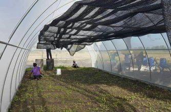 Sustainable natural farming, isinusulong ngayon sa lalawigan ng Pangasinan