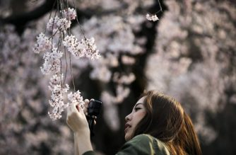 FILES: A woman takes pictures of cherry blossoms in a park in Tokyo on March 30, 2017. (Photo by Behrouz MEHRI / AFP)