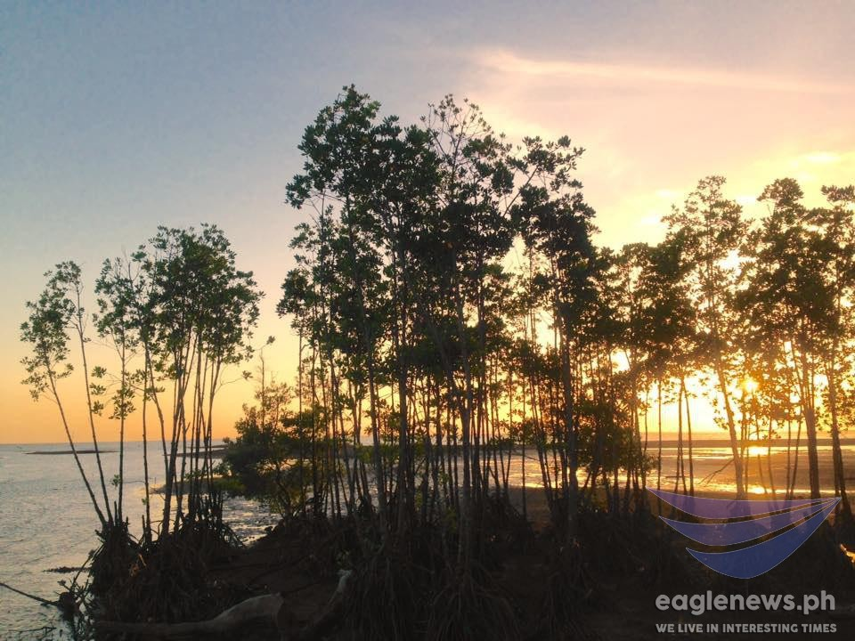#EBCphotography: Trees ablaze with light during sunset in Donsol, Sorsogon