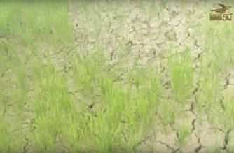 Wao, Lanao Del Sur, isinailalim na sa state of calamity dahil sa El Niño
