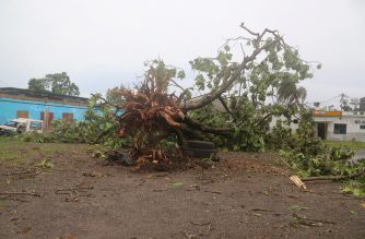A fallen tree is pictured on April 25, 2019 in Moroni after tropical storm Kenneth hit Comoros before heading to recently cyclone-ravaged Mozambique. - Cyclone Kenneth passed the Indian Ocean archipelago nation Comoros today but its effects, including high winds and heavy rains, were still being felt, the country's Meteorological Office wrote on Facebook. (Photo by Ibrahim YOUSSOUF / AFP)