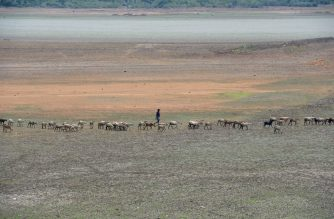 In this photo taken on June 14, 2019 an Indian shepherd walks with their lifestock at the dried out Puzhal reservoir on the outskirts of Chennai. - Water levels in the four main reservoirs in Chennai have fallen to one of its lowest levels in 70 years, according to Indian media reports. (Photo by ARUN SANKAR / AFP)