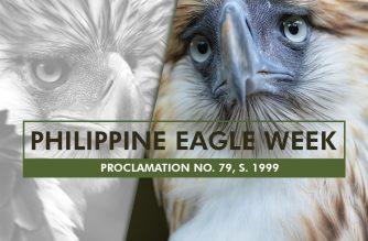 Infographics: Philippine Eagle Week