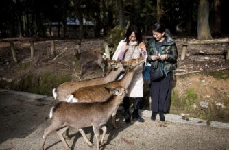 (FILES) This file picture taken on December 7, 2018 shows tourists feeding deer at Nara park in Nara. - Nine deer have died after swallowing plastic bags in Japan's Nara Park, a wildlife group said on July 10, 2019, warning that a surge in tourism may be to blame. (Photo by Behrouz MEHRI / AFP)