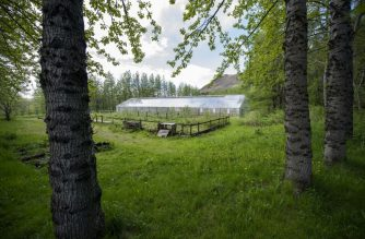 A greenhouse in Mogilsa Forest is pictured close to Reykjavik, Iceland on May 21, 2019. - Before being colonised by the Vikings, Iceland was lush with forests but the fearsome warriors razed everything to the ground and the nation is now struggling to reforest the island. The country is considered the least forested in Europe; indeed, forests in Iceland are so rare, or their trees so young, that it is commonly joked that those lost in the woods only need to stand up to find their way. (Photo by Halldor KOLBEINS / AFP)