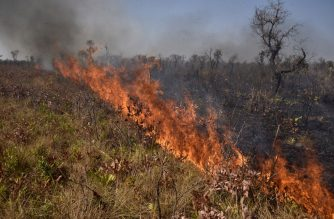 View of a fire near Charagua in Bolivia, on the border with Paraguay, south of the Amazon basin, on August 29, 2019. - Fires have destroyed 1.2 million hectares of forest and grasslands in Bolivia this year, the government said on Wednesday, although environmentalists claim the true figure is much greater. (Photo by Aizar RALDES / AFP)