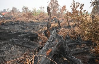 This general view shows a charred stump after a fire swept through the area in the Kampar regency in Indonesia's Riau province on September 12, 2019. - The number of blazes in Indonesia's rainforests has jumped sharply, satellite data showed on September 12, spreading smog across Southeast Asia and adding to concerns about the impact of increasing wildfire outbreaks worldwide on global warming. (Photo by ADEK BERRY / AFP)