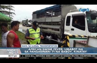 African Swine Fever reaches Pangasinan; at least 71 pigs culled