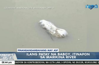 At least 16 dead pigs suspected to be infected with ASF found in Marikina river