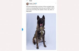 """This screen shot of US President Donald Trump Twitter account taken on October 28, 2019 in Washington DC, shows a picture of a dog that helped capture the Leader of ISIS Abu Bakr al-Baghdadi. - The picture of the dog (name not declassified) was twitted by US President Donald Trump on October 28, 2019. (Photo by Eric BARADAT / TWITTER / AFP) / RESTRICTED TO EDITORIAL USE - MANDATORY CREDIT """"AFP PHOTO / Twitter"""" - NO MARKETING NO ADVERTISING CAMPAIGNS - DISTRIBUTED AS A SERVICE TO CLIENTS --- NO ARCHIVE ---"""