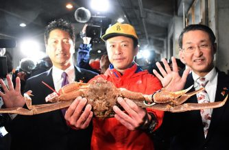 "This picture shows a snow crab, sold for a record of 46,000 USD at an auction, in Tottori city on November 7, 2019. - A Japanese bidder may be feeling the pinch after forking out 46,000 USD at auction for a snow crab -- a price that ""probably set a new world record,"" local officials said November 7. The crab, weighing in at 1.2 kilogrammes and measuring 14.6 centimetres across, went for a final price of five million yen at the auction in western Tottori prefecture. (Photo by STR / JIJI PRESS / AFP) / Japan OUT"