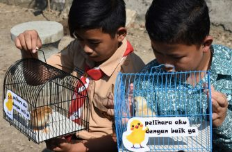 "Indonesian pupils look at chicks in cages with signs that read ""please take good care of me"", given to them by local officials as part of a programme to wean schoolchildren off smartphones, in Bandung, West Java, on November 21, 2019. - Students in an Indonesian city are getting their very own baby chicks to raise as part of a bid -- dubbed ""chickenisation"" -- to wean them off smartphones. Some 2,000 palm-sized chicks are to be handed out to pupils in elementary and high schools across Bandung, about 150 kilometres southeast of the capital Jakarta, in the coming weeks. (Photo by TIMUR MATAHARI / AFP)"