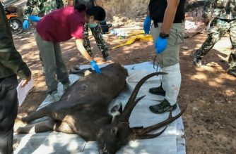 "In this handout photo released by the Office of Protected Area Region 13 on November 26, 2019 and taken on November 25, veterinarians prepare to examine a dead deer at Khun Sathan National Park in Thailand's Nan province. - A wild deer was found dead after swallowing 7 kilograms (15 pounds) of plastic bags and other trash in Thailand, an official said November 26, raising the alarm on waste littering the country's waters and forests. (Photo by Handout / Office of Protected Area Region 13 / AFP) / -----EDITORS NOTE --- RESTRICTED TO EDITORIAL USE - MANDATORY CREDIT ""AFP PHOTO / Office of Protected Area Region 13"" - NO MARKETING - NO ADVERTISING CAMPAIGNS - DISTRIBUTED AS A SERVICE TO CLIENTS"