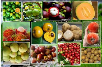A sample of local fruits.  (Photo collage courtesy Department of Agriculture)