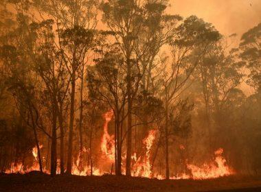 bush fire in the australian outback