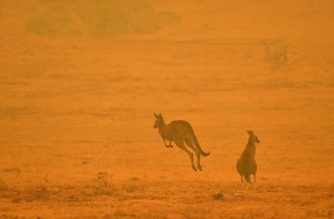A kangaroo jumps in a field amidst smoke from a bushfire in Snowy Valley on the outskirts of Cooma on January 4, 2020. - Up to 3,000 military reservists were called up to tackle Australia's relentless bushfire crisis on January 4, as tens of thousands of residents fled their homes amid catastrophic conditions. (Photo by SAEED KHAN / AFP)