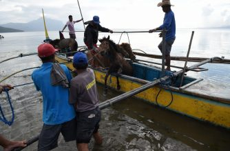 Residents living at the foot of Taal volcano unload their horses from a wooden boat after rescuing them from their homes and transporting them to Balete town, Batangas province south of Manila on January 14, 2020. - Taal volcano in the Philippines could spew lava and ash for weeks, authorities warned January 14, leaving thousands in limbo after fleeing their homes fearing a massive eruption. (Photo by Ted ALJIBE / AFP)