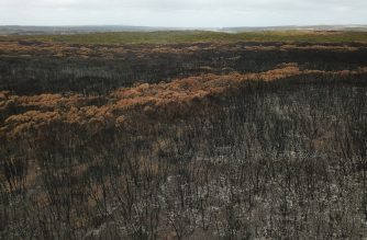 An aerial photo taken on January 16, 2020 shows a fire damaged landscape on Kangaroo after bushfires ravaged the island off of the south coast of Australia. - Australia is reeling from bushfires that since September 2019 having claimed 28 lives, including two on Kangaroo Island, and razed 10 million hectares (100,000 square kilometres) of land -- an area larger than South Korea or Portugal. (Photo by PETER PARKS / AFP) / TO GO WITH Australia-livestock-fire-environment,FOCUS by Holly ROBERTSON
