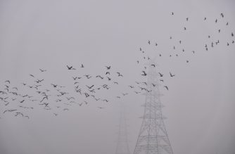 Migratory birds fly over the Yamuna River amidst heavy smog conditions in New Delhi on January 21, 2020. (Photo by Noemi Cassanelli / AFP)
