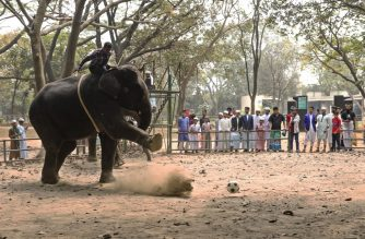 In this photograph taken on February 24, 2020 a mahout rides an elephant during a soccer game at Dhaka Zoo, in Dhaka. - Bangladesh's biggest zoo has called time on elephant rides following a long-running campaign by activists. The ban was quietly introduced last month, Dhaka zoo curator Nurul Islam told AFP, adding it would never been lifted. (Photo by Joyeeta ROY / AFP)
