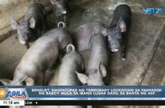 Benguet, nagpatupad ng temporary lockdown sa pagpasok ng live hogs dahil sa banta ng ASF