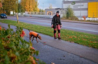 Marianne Mayer, dog trainer and promoter of a campaign that aims to give dog poo a new life, takes a walk with one of her dogs in Vantaa, Finland on October 7, 2019. - In the search for cleaner ways to generate electricity, power companies in Finland have set their sights on an energy source which is distinctly more brown than green: animal dung. (Photo by Alessandro RAMPAZZO / AFP)