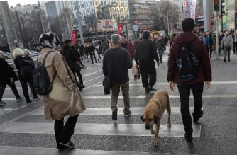 A dog and pedestrians cross a road along a zebra crossing in Ankara on March 8, 2020. (Photo by Adem ALTAN / AFP)