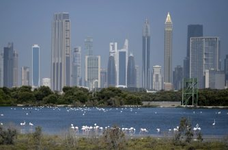 Pink flamingoes feed in the mud flats at the Ras al-Khor Wildlife Sanctuary in Dubai, with the city skyline seen in the background, on March 18, 2020 as the site has been closed to the public amidst the coronavirus COVID-19 pandemic. (Photo by KARIM SAHIB / AFP)