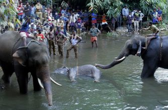 This photograph taken on May 27, 2020 shows policemen and onlookers standing on the banks of the Velliyar River in Palakkad district of Kerala state as a dead wild elephant (C), which was pregnant, is retrieved following injuries caused when locals fed the elephant a pineapple filled with firecrackers as it wondered into a village searching for food. (Photo by STR / AFP)