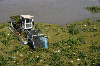 """A boat removes Eichhornia crassipes, commonly known as water hyacinth, from the surface of the Euphrates river, in Iraq's Shatrah district of the southern Dhi Qar province, on June 4, 2020. - The water hyacinth, nicknamed """"Nile flower"""", an invasive plant native to South America that has ravaged ecosystems across the world, was introduced to Iraq just two decade ago as a decorative plant, but now the country's celebrated Tigris and Euphrates rivers are suffering from its unstoppable spread across their surfaces. (Photo by Asaad NIAZI / AFP)"""