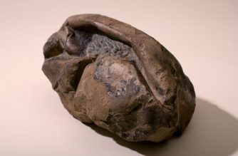 """Handout picture released on June 16, 2020 by the Chilean National Museum of Natural History showing a fossil egg allegedly from a mosasaurus, a dinosaur species that lived in the Antarctic Peninsula 66 million-years ago, according to investigators from Texas University, Chilean University and the Chilean National Museum of Natural History, in Santiago. - The gigantic soft shell egg, almost 30 centimeters long, is the second largest known in the history, with similar characteristics to the current lizards and snakes. (Photo by Handout / CHILEAN NATIONAL MUSEUM OF NATURAL HISTORY / AFP) / RESTRICTED TO EDITORIAL USE - MANDATORY CREDIT """"AFP PHOTO /  CHILEAN NATIONAL MUSEUM OF NATURAL HISTORY / CRISTIAN BECKER"""" - NO MARKETING NO ADVERTISING CAMPAIGNS - DISTRIBUTED AS A SERVICE TO CLIENTS"""