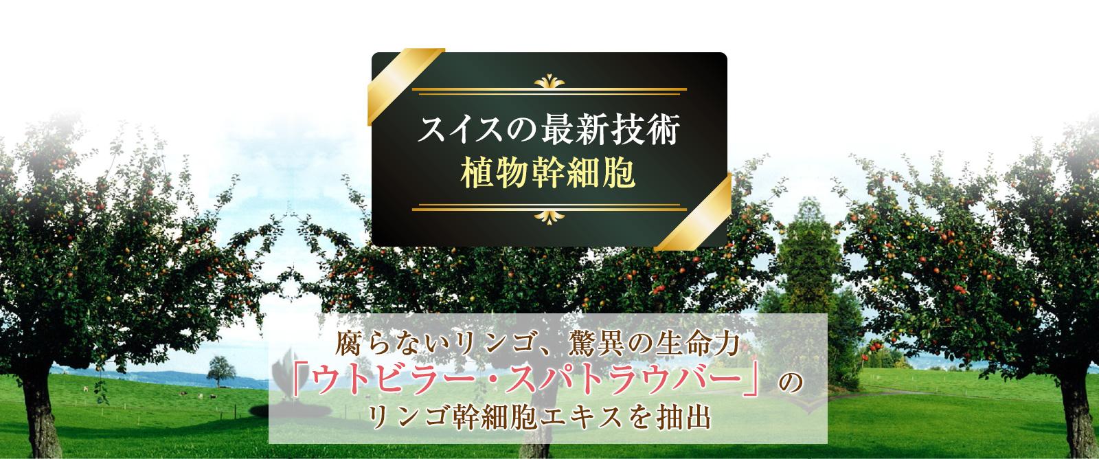 日本の最新医療技術 植物幹細胞