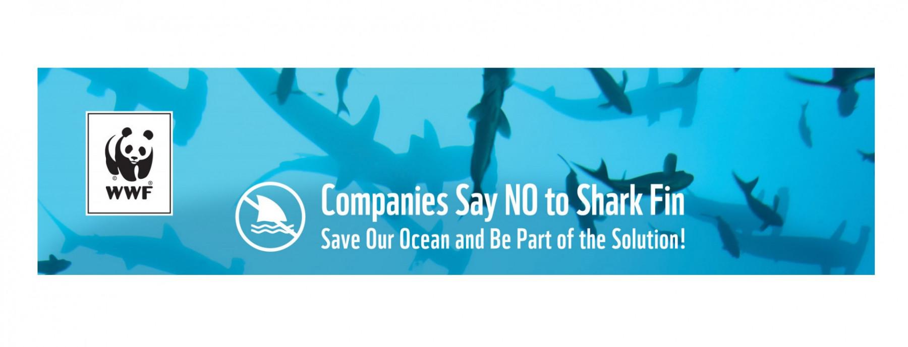 Play Concept - Play Concept says NO to shark fin! - 1