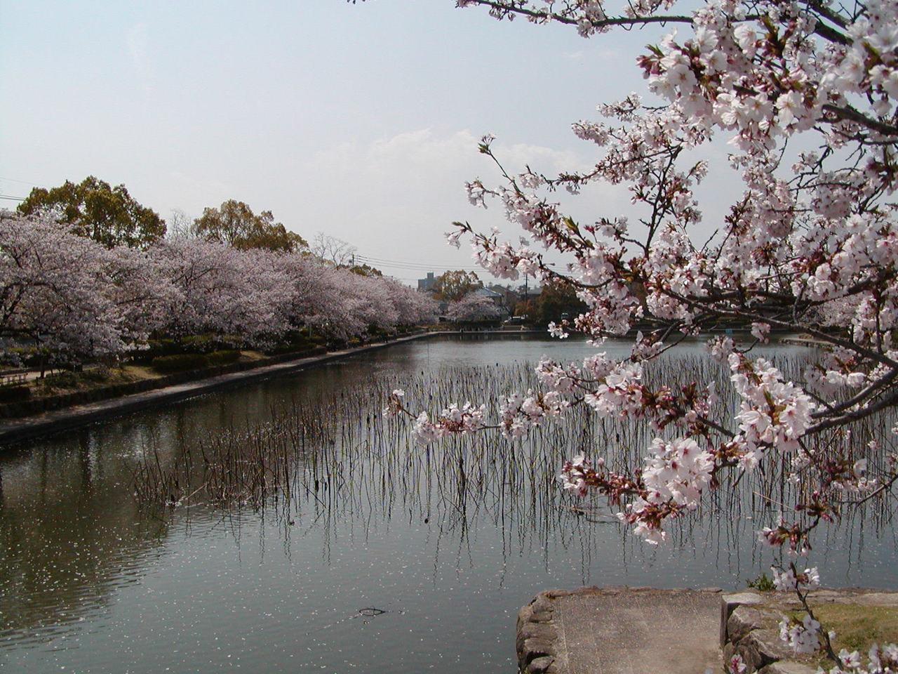 佐賀城公園の画像