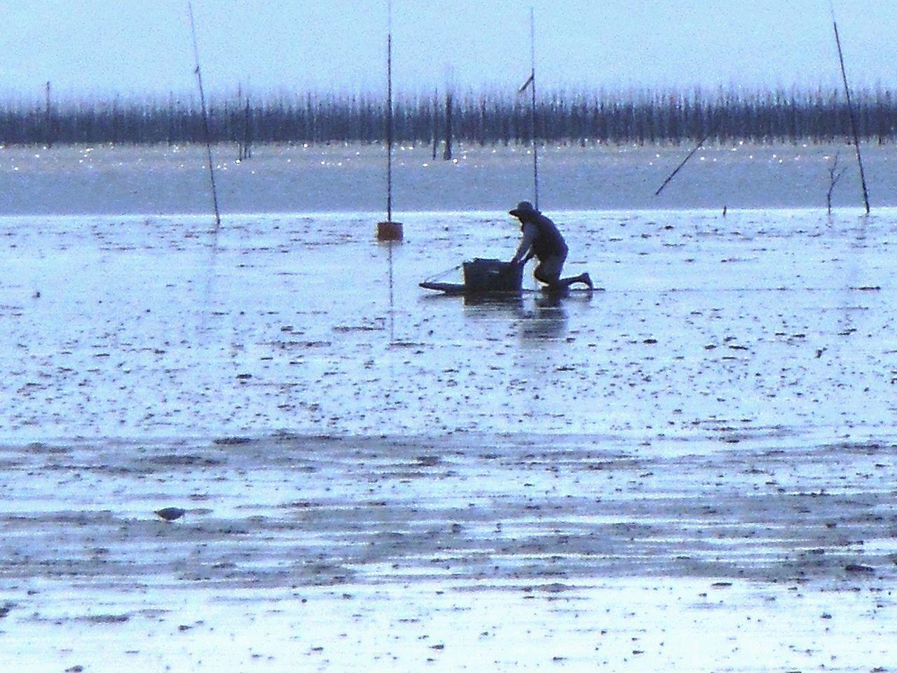 有明海の干潟の画像