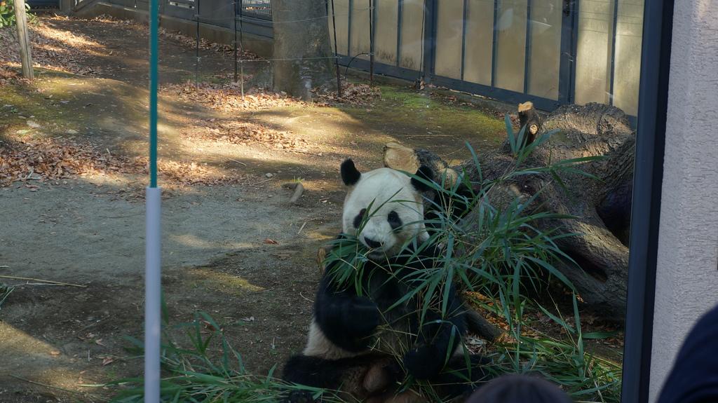 上野動物園Image