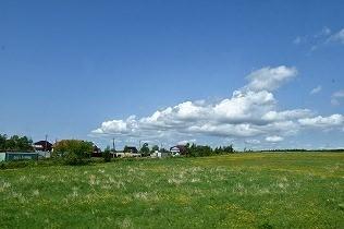 急に空が明るくなると、辺りは小さな黄色い花の草原になった。