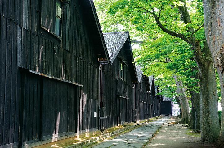 函館発 夏の日本海クルーズ