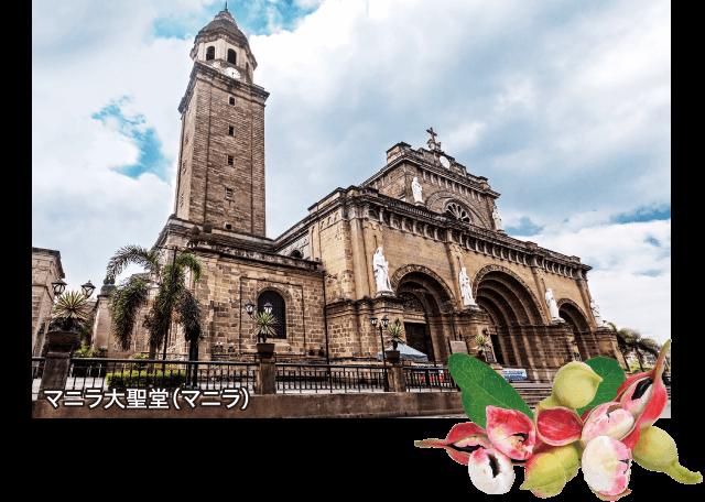 マニラ大聖堂(マニラ)