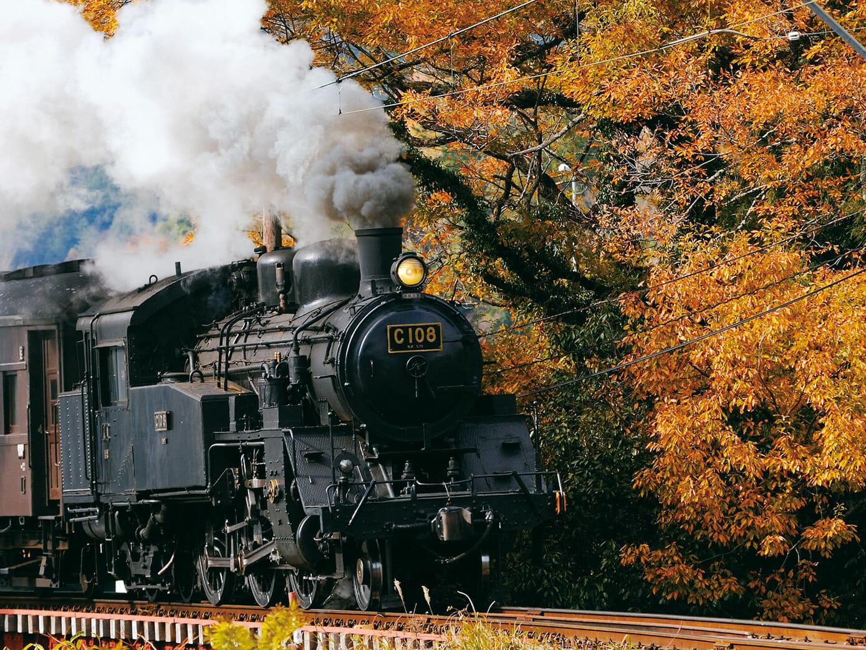 11/17 大井川鐵道SLで紅葉を楽しむ