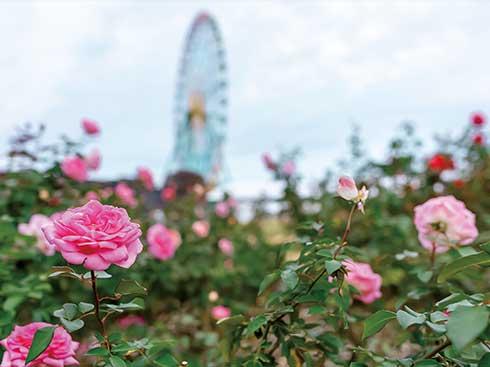 花の楽園・海浜公園や紅葉が進む袋田の滝へ<br>■常陸那珂
