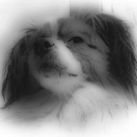 Phaleneのアイコン画像