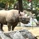 青莉苫子のアイコン画像