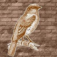 Sparrow Tuneのアイコン画像