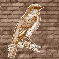Sparrow Tuneのアイコン